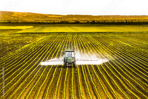 Fotomural  Tractor spraying a field of corn