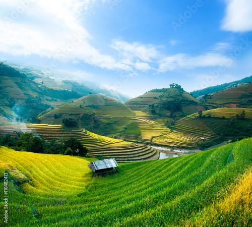 Garden Poster Rice fields Rice fields prepare the harvest at Northwest Vietnam.