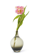 Pink Tulip Flower In A Black Glass Vase..
