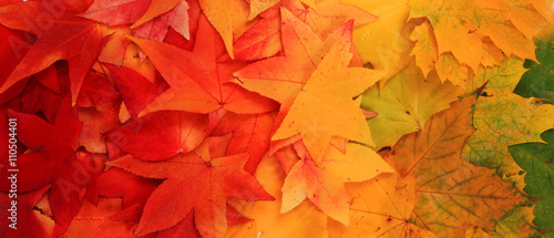 autumn leaves background - 110504401