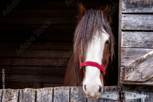Head of a Clydesdale horse/ Head shot of a Clydesdale horse inside is box with Canvas-taulu