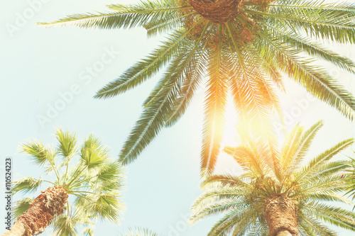 Foto op Plexiglas Palm boom palm tree and sunshine