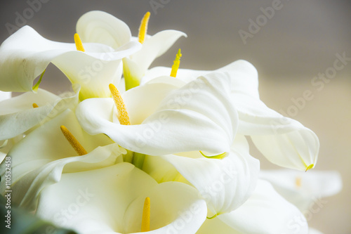 Canvas Print Calla lilies close-up.