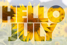 Hello July Word On Sunflower Background