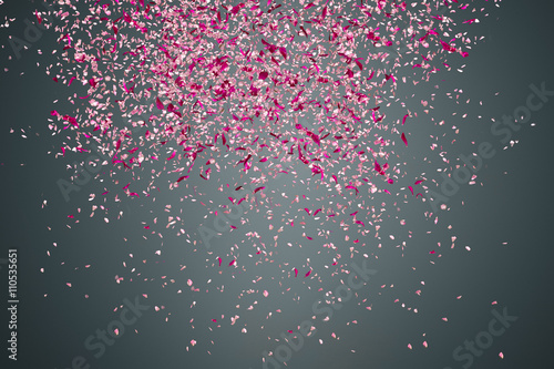 Flower petals on dark background