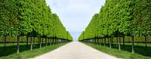 Allée Perspective Jardin Parc...