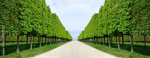 Fotografie, Obraz  allée perspective jardin parc arbre tailler feuille marronnier