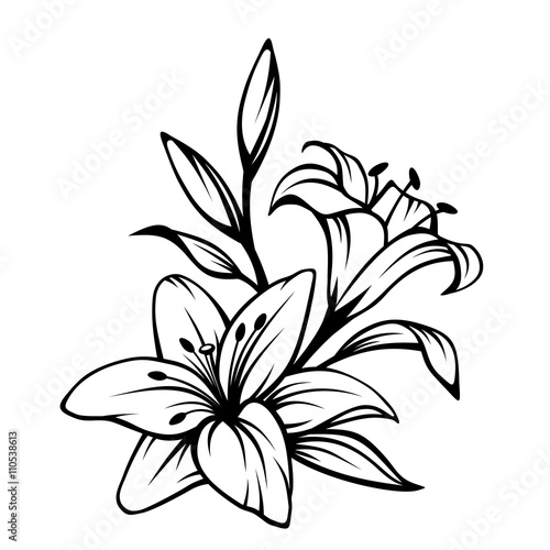 Fotografia  Vector black contour of lily flowers isolated on a white background