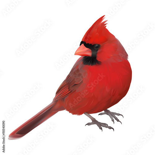 Fotografie, Tablou Northern Cardinal portrait