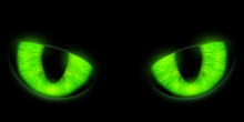 Green Cats Eyes Isolated On A ...