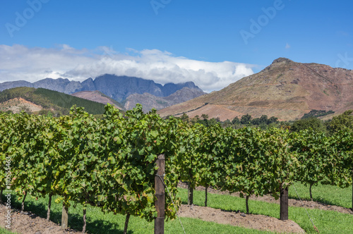 Deurstickers Zuid Afrika The Cape Winelands region is the premier wine producing area of South Africa