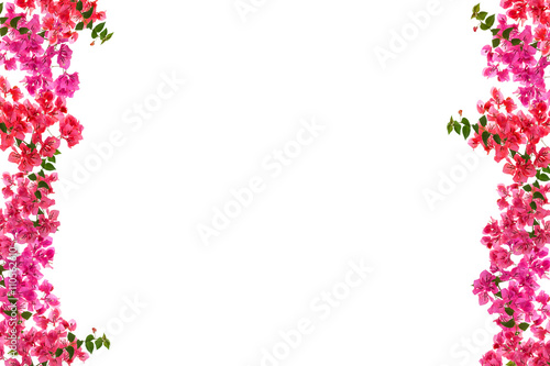 Fotomural Bougainvillea flower frame on white background ,Provincial flowe