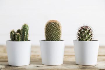 Panel Szklany Skandynawski Three cactus plants