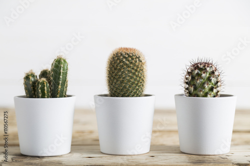 Spoed Foto op Canvas Cactus Three cactus plants