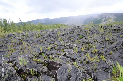 Fotografia  Coulées de laves de 2001 et 2004, forêt du grand brûlé