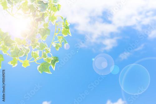 Foto  植物と青空