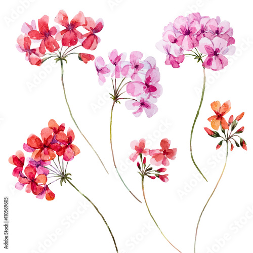 Photo Watercolor geranium floral set