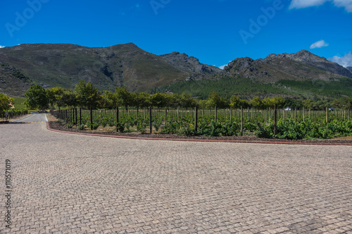 Foto op Plexiglas Zuid Afrika The Cape Winelands region is the premier wine producing area of South Africa