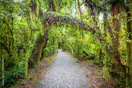 sciezka-przez-las-deszczowy-1-nowa-zelandia