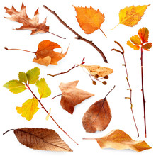 Collection Of Autumn Dried Twi...