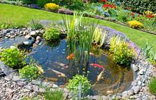 Teichanlage Mit Koi-Karpfen Im...