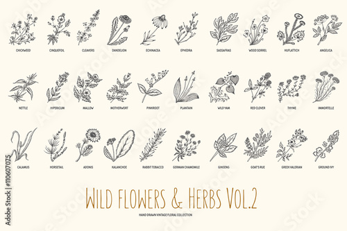 Valokuvatapetti Wild flowers and herbs hand drawn set