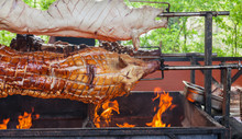 Three Whole Pigs On A Spit On A Barbecue