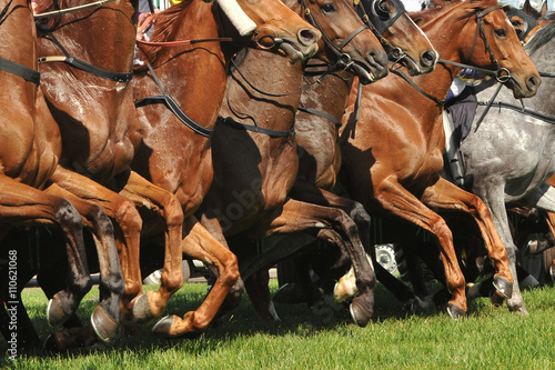 Carta da parati Horse racing action jumping from the starting gates