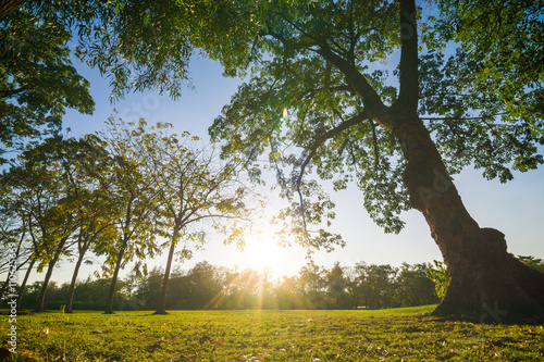 Foto op Plexiglas Landschappen Sunset in beautiful park over blue sky