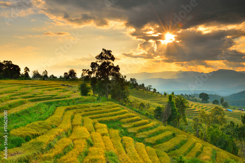 Aluminium Prints Rice fields Cornfield sunset of Thailand.