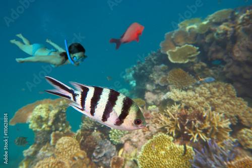 snorkeling-w-wielkiej-rafie-ba