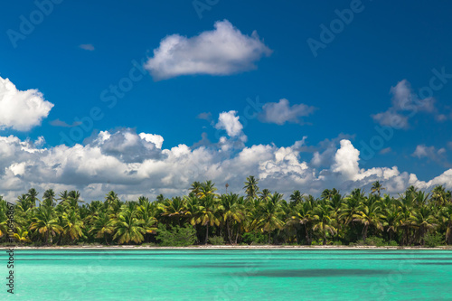 Poster Zanzibar Panoramic view of Exotic Palm trees and lagoon on the tropical Island beach