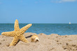 Background: sea star and shells on the sand of the sea