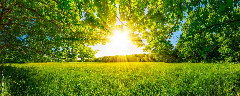 Fototapety, obrazy: Von Bäumen umgebene Wiese bei Sonnenschein