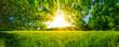 canvas print picture - Von Bäumen umgebene Wiese bei Sonnenschein