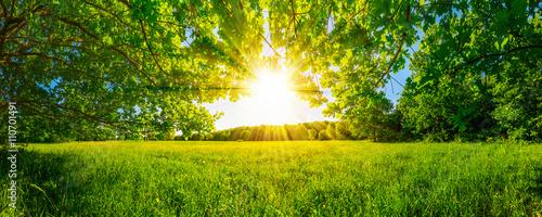 Obraz Von Bäumen umgebene Wiese bei Sonnenschein - fototapety do salonu