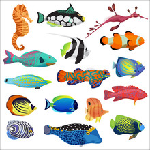 Exotic Colorful Tropical Fish Fishes Collection Set Isolated.