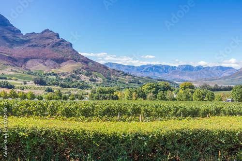 Foto op Plexiglas Zuid Afrika The Cape Winelands region is the premier wine producing area of South Africa