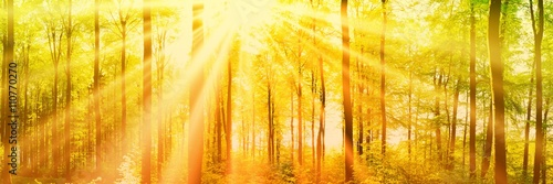 Poster Melon Wald Panorama mit Sonnenstrahlen