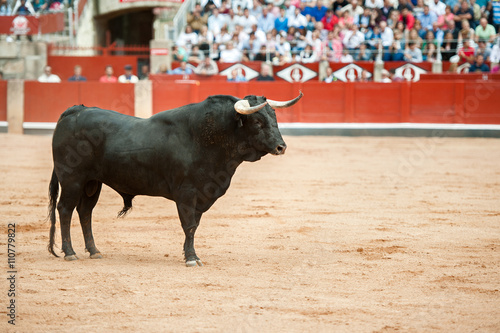 black bull on the arena with public fund