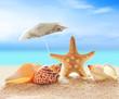 Starfish under umbrella on the beach.