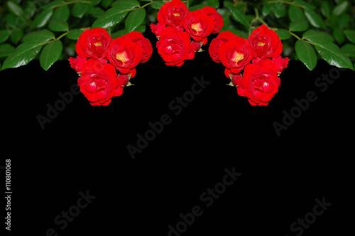 Rosas Flores Fondo Negro Primavera Buy This Stock Photo And