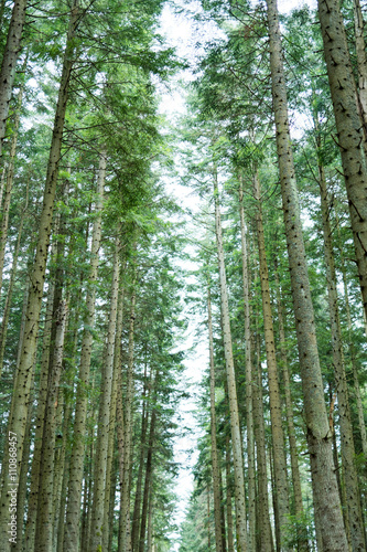 Photo Stands Road in forest Footpath in the coniferous wood