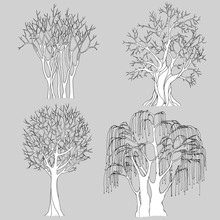 A Set Of Four Bare Trees Drawn With Black Outlines, With Detailed Branches And Twigs. Vector Illustration For Coloring Pages Or Other.