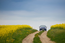 Blue Small Car Traveling Near Field Yellow Rapeseed