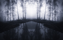 Forest Trees Reflecting In Water