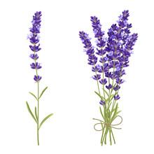Lavender Cut Flowers Realisti...