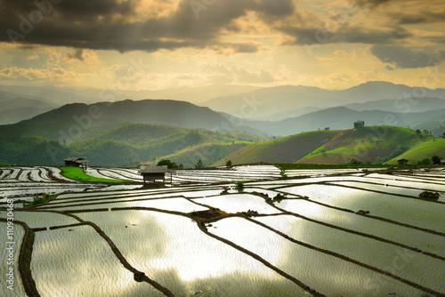 Foto auf Gartenposter Reisfelder Cornfield sunset of Thailand.