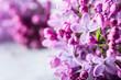 Lilac. Purple Lilac. bouquet of purple lilacs. bouquet of purple lilac and antique scissors. Toned Photo