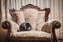 Portrait Of Rabbit Sitting On Ornate Chair